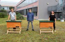 ES summt – Zwei Bienenvölker auf dem Centerdach