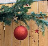 Ein Tannenbaum wird zum Weihnachtsbaum