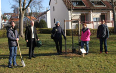 150 Bäume für die Stadt