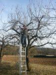 Baumschnittannahme