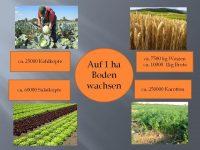 Lebensmittelerzeugung – global  oder  regional?