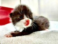Kätzchen fast geshreddert