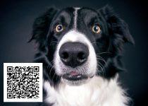 Nur 3 Klicks: Ihre Stimme fördert Rettungshunde